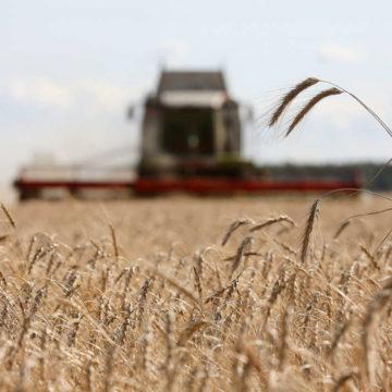 Российский экспорт пшеницы в текущем году вырос на 270% и составил 676 тыс. тонн