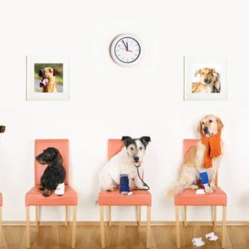 Ветеринарная клиника: профессиональная забота о домашних питомцах