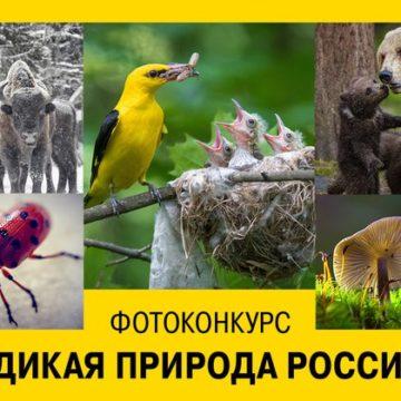 «Дикая природа России — 2018»: три дня до завершения приема работ