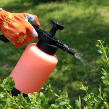 Современные средства защиты посевных растений