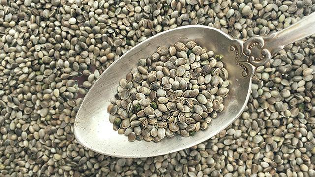 Семена конопли в Украине