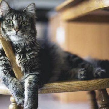 Действительно котам безразлично, если их хозяина обидят
