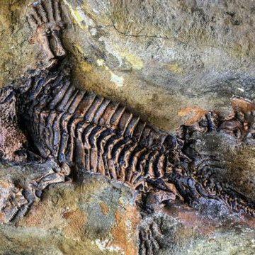 Как стать окаменелостью и войти в историю навсегда